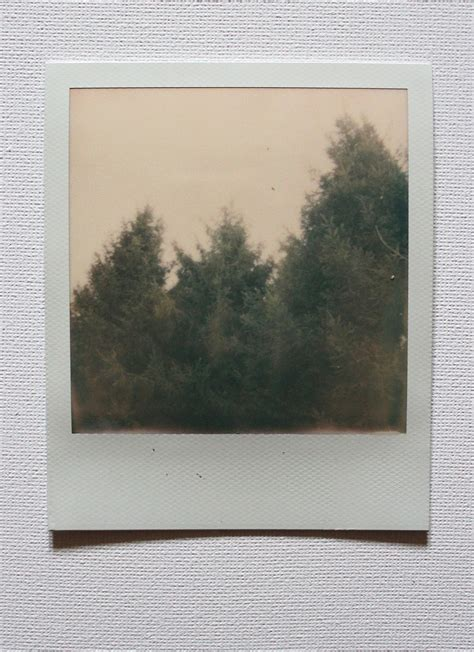 polaroids: a journey through the forest | Harriet Emily