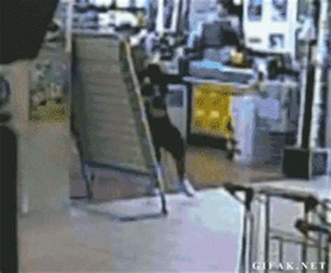 Hilarious GIFs Of People Experiencing Instant Karma