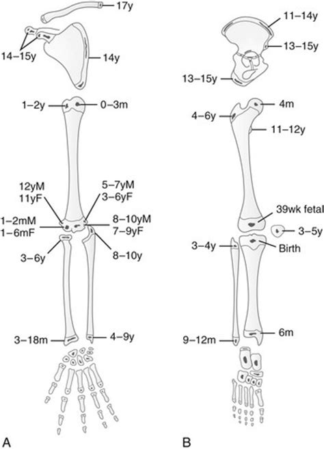 Embryology, Anatomy, and Normal Findings   Radiology Key