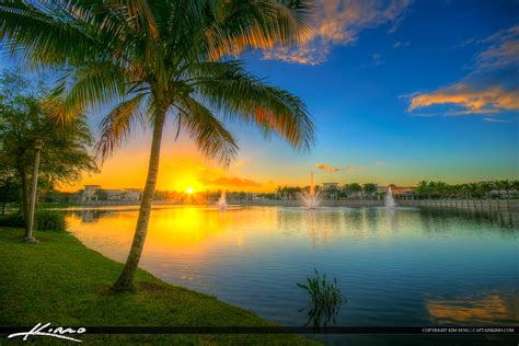 Downtown Gardens Lake Victoria Coconut Tree Sunset